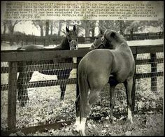 Secretariat at Claiborne. Round Table facing us and wearing muzzle.