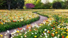 *Heaven* I imagine heaven to be covered in flowers like this. Path through the Poppy fields in Showa Kinen Park in Tokyo, Japan Love Flowers, Beautiful Flowers, Beautiful Pictures, Amazing Photos, Garden Paths, Garden Landscaping, Beautiful World, Beautiful Gardens, Flower Carpet