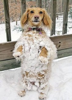 "This little one who's motto is ""in order to defeat the snow, one must become the snow."" ...*CLICK TO SEE 19 REALLY CUTE photos and animations of pups in snow!"