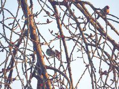 The Goldfinch Goldfinch, Wordpress, Fotografia