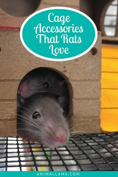 Our pet rats spend a lot of time in their cages so it's only fair to make those cages as much fun as possible! Here is our list of the must-have rat cage accessories and decorations that will make any rat happy and comfortable in their home. #rat #rats #animals #pets #rodents #petcare