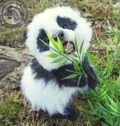 Top 10 Cutest Baby Panda Videos Uncomplicated Tutorials Images Of Cute Pandas Cute Little Animals, Cute Funny Animals, Cutest Animals, Adorable Baby Animals, Adorable Puppies, Cute Animals Puppies, So Adorable, Cute Pets, Cute Wild Animals