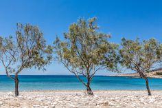 Glyfa #Beach, #Paros: one of our favourites!Clear waters and lots of trees for shade.
