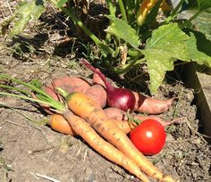 """St. John's has been participating in the """"Eat from the Garden"""" community garden project."""