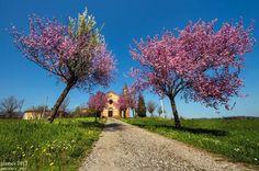 Twitter / turismoER: Aprile a Statto, #ValTrebbia #Piacenza by GiamesPhoto