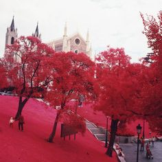 I wish autumn in Madrid really looked like this. (photo taken next to Museo del Prado, not mine) Beautiful World, Beautiful Places, Beautiful Pictures, Beautiful Scenery, Beautiful Flowers, Prado, What's My Favorite Color, Red Tree, Pink Trees
