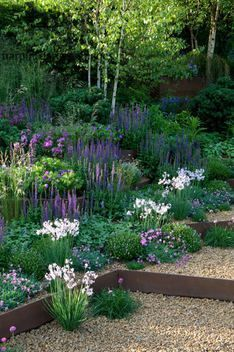 Harpur Garden Images Ltd :: Marcus Harpur A Garden for First Touch at St George's Sloping garden of green foliage. A slope with dense planting of colourful purple blue perennials and grasses including salvia nemorosa. Corten steel step risers with gravel