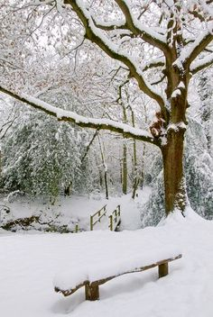 overnight snowfall...