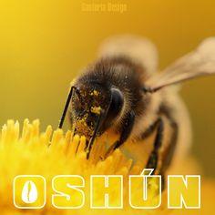 Orishas Yoruba, Yoruba Religion, African Goddess, Spirit World, Goddess Of Love, Deities, Popup, Honey, Animales