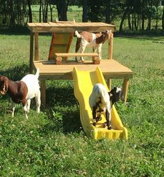Playground for Goats‼️