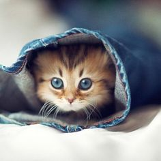 Very Cute Kittens Wallpaper 9699 Full Hd Wallpaper Desktop Res