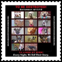TO BE DESTROYED 13 beautiful dogs -SAT. 04/11/15 -PLEASE share their stories to help find them true forever loving homes. This is an EXTREMELY high kill facility. To rescue a DEATH ROW DOG please read: information.urgen... To view the full album, please click here: nycdogs.urgentpod... - nycdogs.urgentpod...