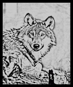Wolf Coloring Pages Free Wolf Coloring Pages Tigersit Coloring
