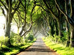"""""""The Dark Hedges"""" A Magical Tree Lined Road in Ireland Beautiful Roads, Beautiful Places, Amazing Places, Dark Hedges Ireland, Downton Abbey, Tree Tunnel, Magical Tree, Green Landscape, Blog Voyage"""