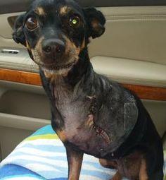 DOG ADOPTION, PET BOARDING, ANIMAL RESCUE, CENTRAL FLORIDA