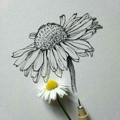 """Résultat de recherche d'images pour """"how to draw flowers step by step with pencil"""""""