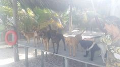 Bonnie Beach Rescue - Telchac Puerto, Mexico! These animals only need some love <3