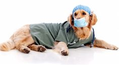 Pet ER! - A Must Watch Show!  Experience all the drama and heartbreak of emergency veterinary medicine in this gripping docudrama series, as real-life vets race against time to save the lives of beloved pets. A Pet Network original series, produced by BEST BOY ENTERTAINMENT. Click on the image for more info about this series! - ED