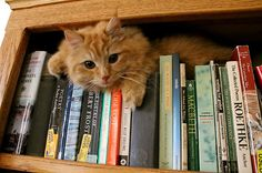 My two favorite things! Books and cats.