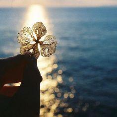 いいね!101件、コメント8件 ― kanaさん(@__kana.q__)のInstagramアカウント: 「. . 嬉し涙のような 悲し涙のような どっちも美しいものなのかもしれない。 . . . #om1 #dryflower  #sea #sunrise  #紫陽花」