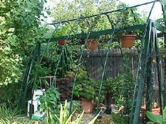 A Small Backyard Greenhouse Greenhouse Frame, Backyard Greenhouse, Greenhouse Plans, White Clematis, Fire Pit Bbq, Gardening Supplies, Gardening Tips, Cold Frame
