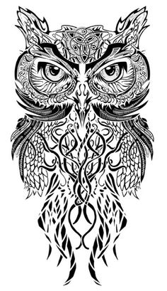 H owl drawing illustration