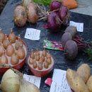 Tipos de hortalizas para el huerto ecológico