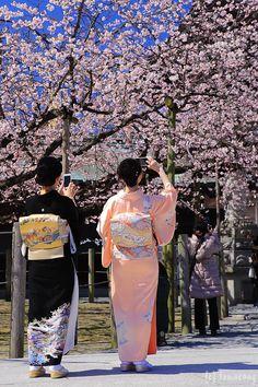 Geisha underneath the Japanese Cherry Blossom trees! Japanese Prints, Japanese Design, Japanese Kimono, Cherry Blossom Japan, Cherry Blossoms, Blossom Trees, Japan Sakura, Sakura Sakura, All About Japan