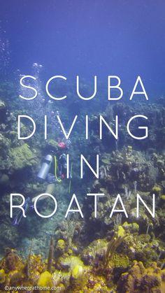Scuba Diving in Roatan, Honduras