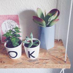 Succulents - OK - Sostrene Grene - shelve