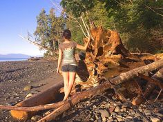 Follow my journey across Canada and my new life on Vancouver Island! The Little…