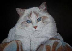 "Saatchi Art Artist: Cybele Chaves; Pastel 2010 Painting ""Ragdoll Cat"""