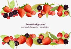Vector hand painted fruit borders 3239472 pngtree