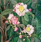 Margaret Mee Art Prints - Bing Images