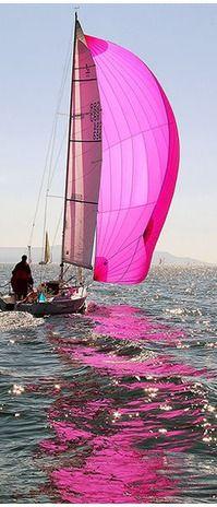 Pink Spinnaker