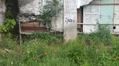 Croatia is a clean, modern city that just happens to be scattered with ruins. Modern City, Capital City, Abandoned Places, Croatia, Remote, Plants, Derelict Places, Flora, Planters