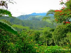 Beautiful views at Ocaso Coffee Farm in Salento, Colombia, in the Eje Cafetero - coffee region.