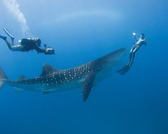 Go Scuba diving!! A trip to the Maldives would be the perfect opportunity!