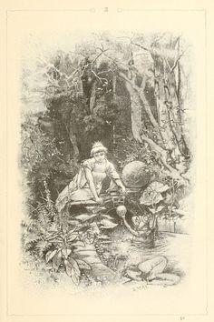hermann vogel illustration by sofi01