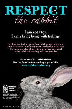 Respect the Rabbit!! Please!!!! :(
