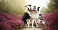 Heartwarming Dog Portraits By 19-Year-Old Polish Photographer | Bored Panda