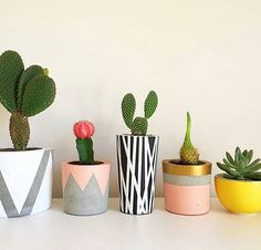 Pin by danielle nicole on cactus succulents diy, plants, concrete pots. Succulent Pots, Cacti And Succulents, Planting Succulents, Potted Plants, Indoor Plants, Planting Flowers, Plant Pots, Small Cactus, Green Cactus