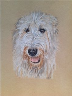 Custom pet portrait / Irish Wolfhound / colored pencil (Polychromos) x Irish Wolfhound Dogs, Gentle Giant, Dog Life, Pet Portraits, Funny Dogs, Colored Pencils, Animals And Pets, Sketches, Colour