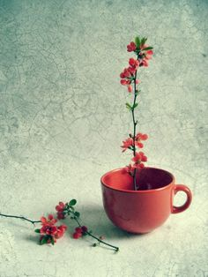 Love the contrast of round, smooth mug and tall, somewhat straight flower - but unity of same red color is beautiful