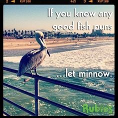 Fin for thought. Fish Puns, California Dreamin', Thoughts, Oceans, Instagram Posts, Wanderlust, Animals, Animales, Animaux