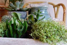 Composition plantes grasses