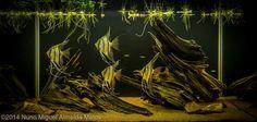 "2014 AGA Aquascaping Contest - Entry #626. ""Fallen Tree."""