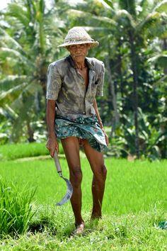 Oude man in de rijstvelden aan het werk