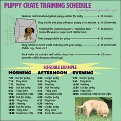 Crate Training Dogs Dogs Crate Dogs Puppy Crate Training