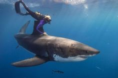 THIS GIRL SNATCHED THE FIN OF A GREAT WHITE SHARK.